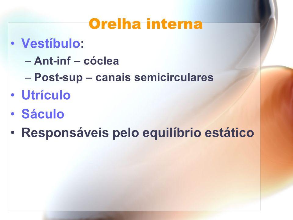 Orelha interna Vestíbulo: Utrículo Sáculo