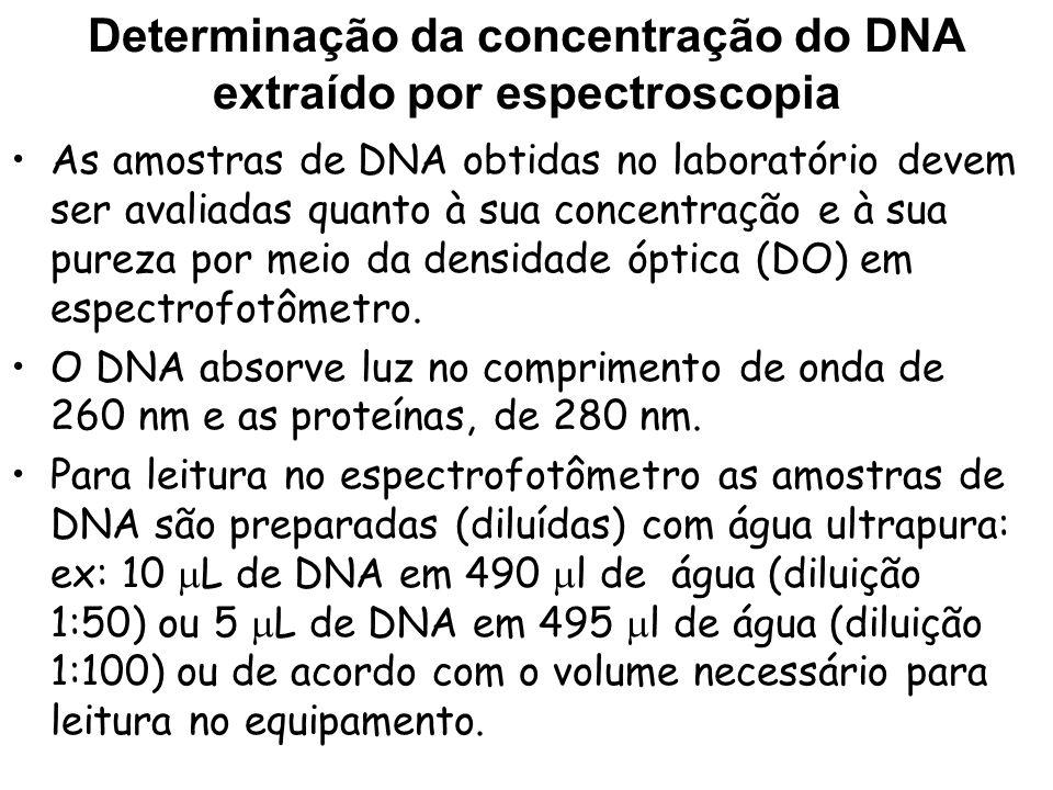 Determinação da concentração do DNA extraído por espectroscopia