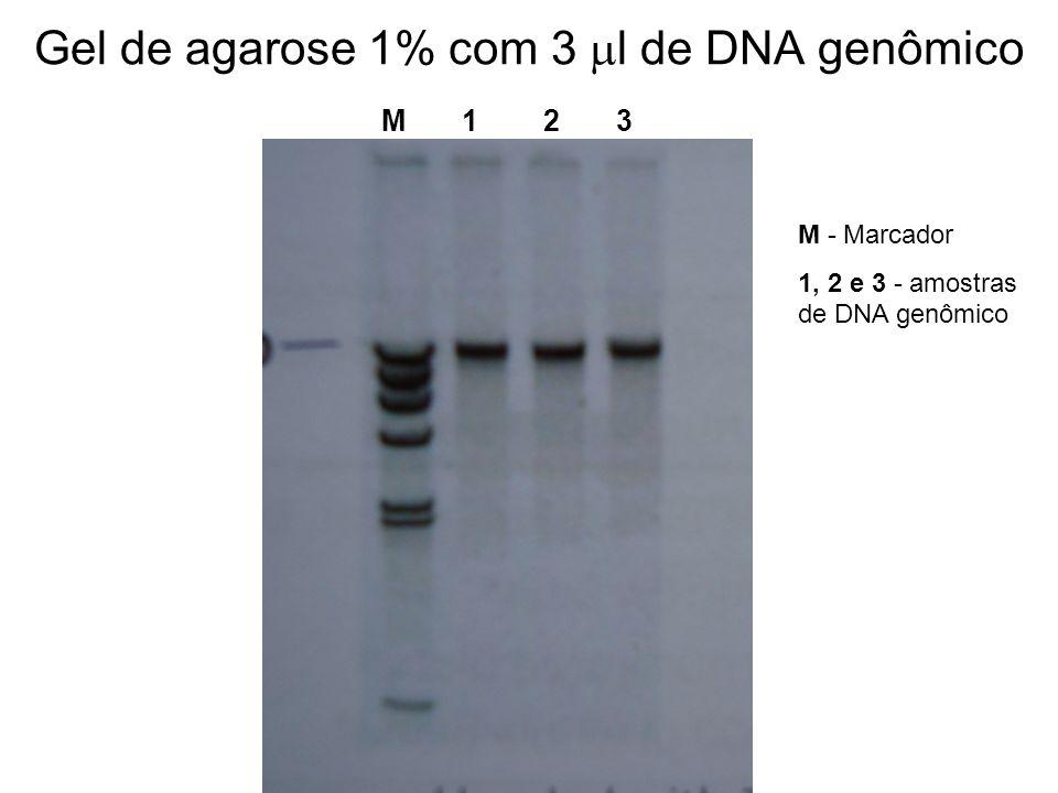 Gel de agarose 1% com 3 ml de DNA genômico