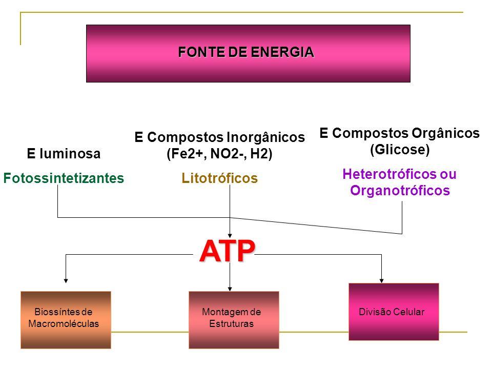 ATP FONTE DE ENERGIA E Compostos Orgânicos (Glicose)
