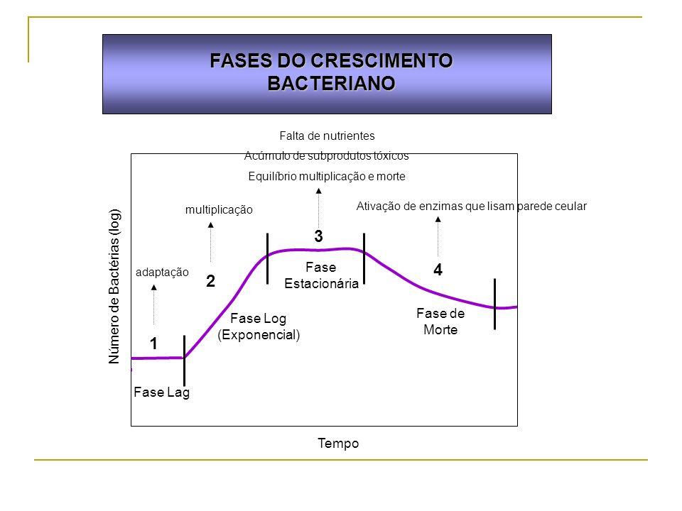 FASES DO CRESCIMENTO BACTERIANO