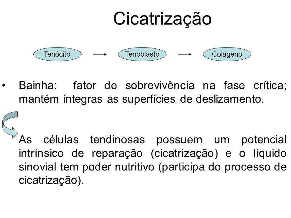 Cicatrização Bainha: fator de sobrevivência na fase crítica; mantém íntegras as superfícies de deslizamento.