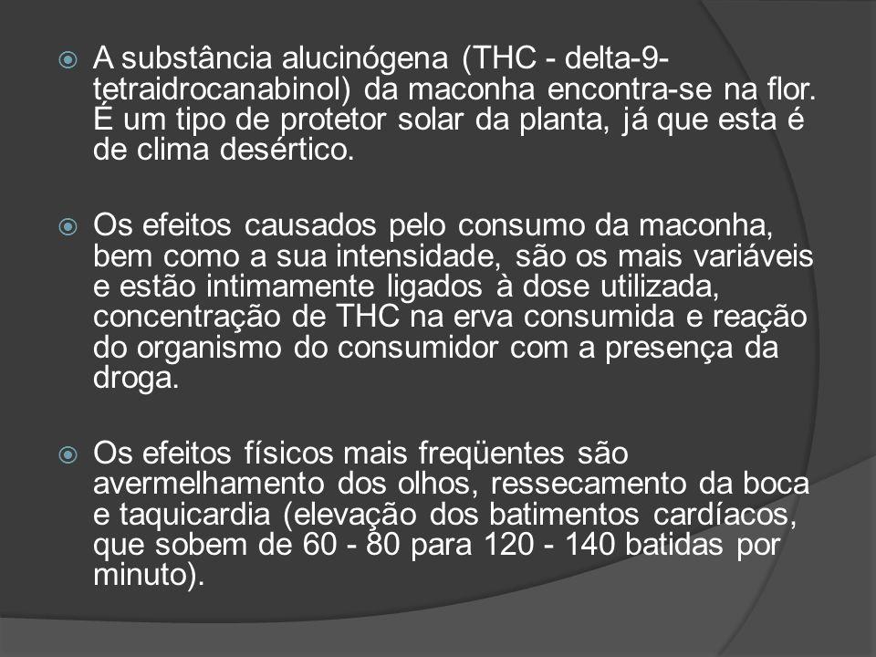 A substância alucinógena (THC - delta-9-tetraidrocanabinol) da maconha encontra-se na flor. É um tipo de protetor solar da planta, já que esta é de clima desértico.