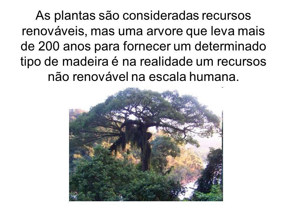 As plantas são consideradas recursos renováveis, mas uma arvore que leva mais de 200 anos para fornecer um determinado tipo de madeira é na realidade um recursos não renovável na escala humana.