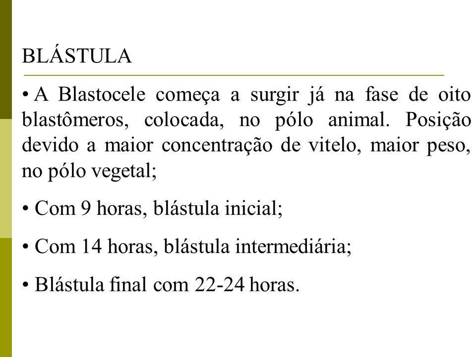 BLÁSTULA