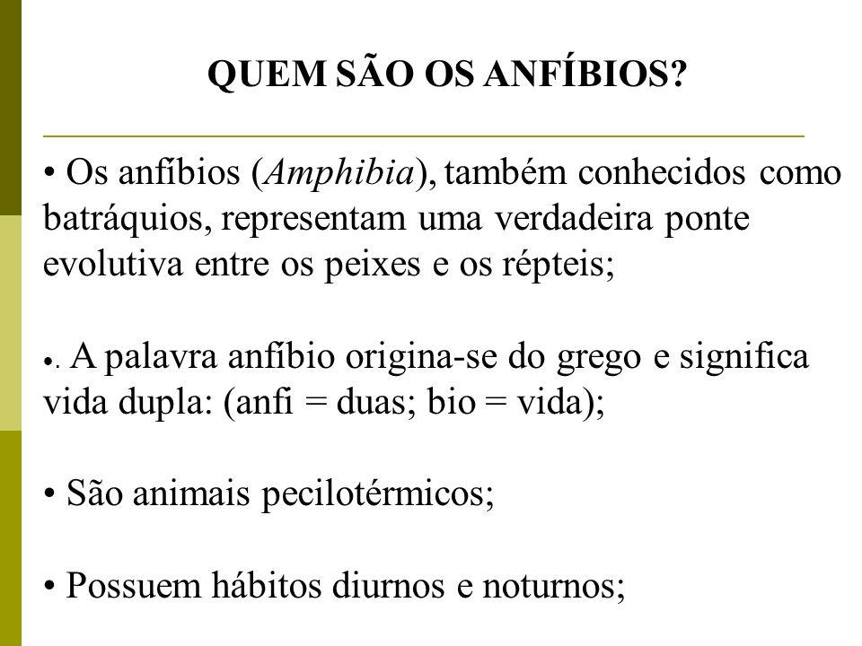 São animais pecilotérmicos; Possuem hábitos diurnos e noturnos;