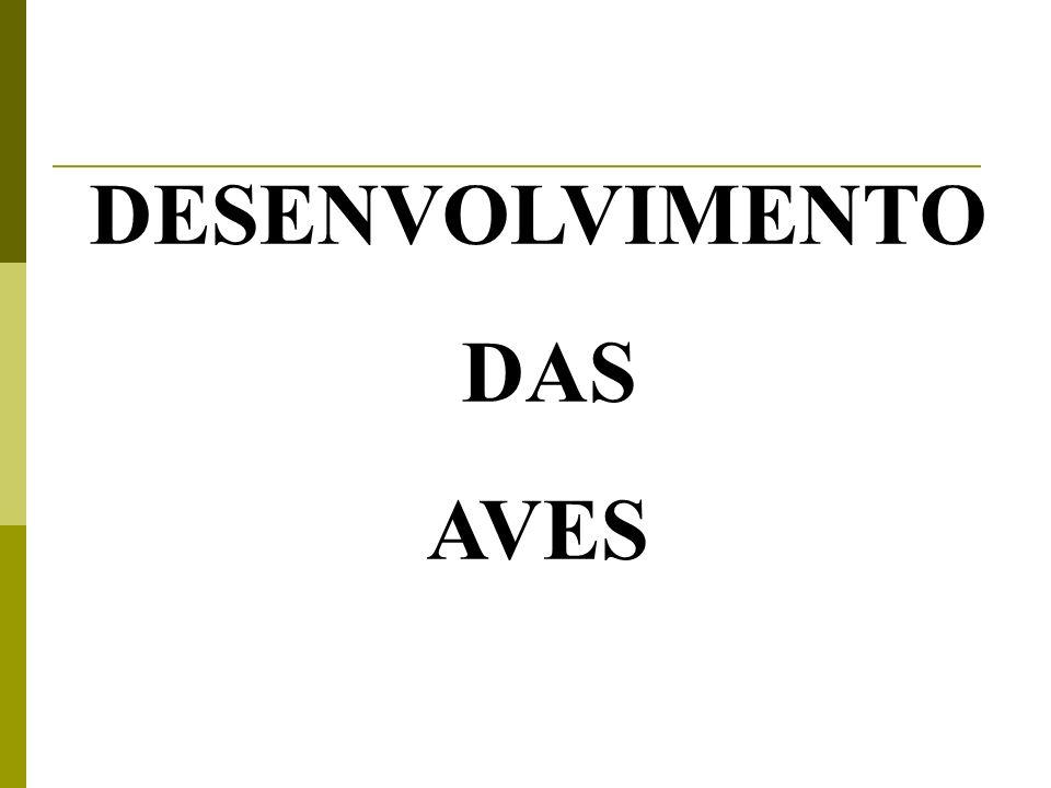DESENVOLVIMENTO DAS AVES