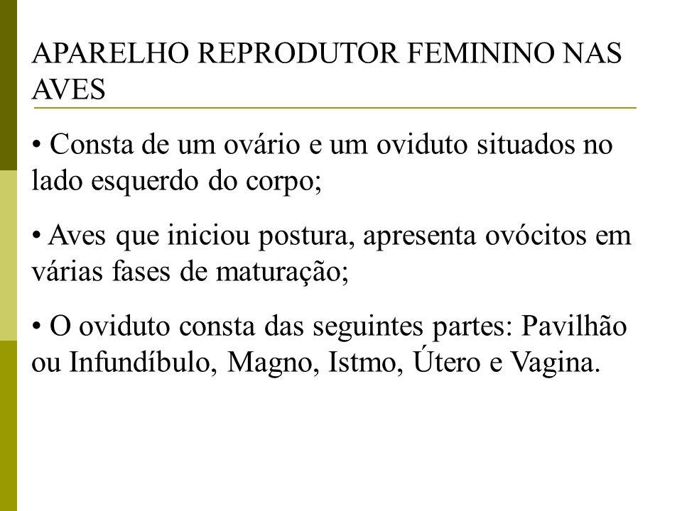 APARELHO REPRODUTOR FEMININO NAS AVES