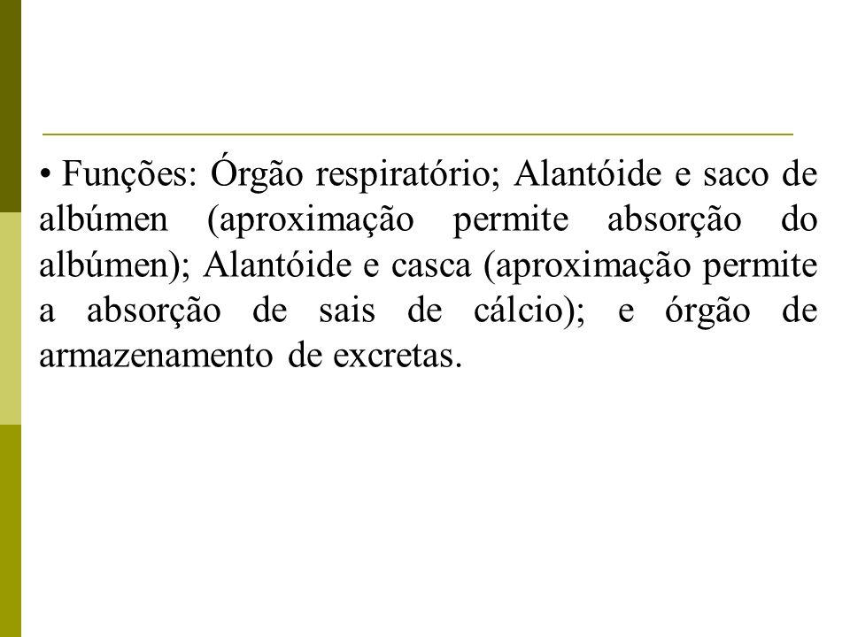 Funções: Órgão respiratório; Alantóide e saco de albúmen (aproximação permite absorção do albúmen); Alantóide e casca (aproximação permite a absorção de sais de cálcio); e órgão de armazenamento de excretas.