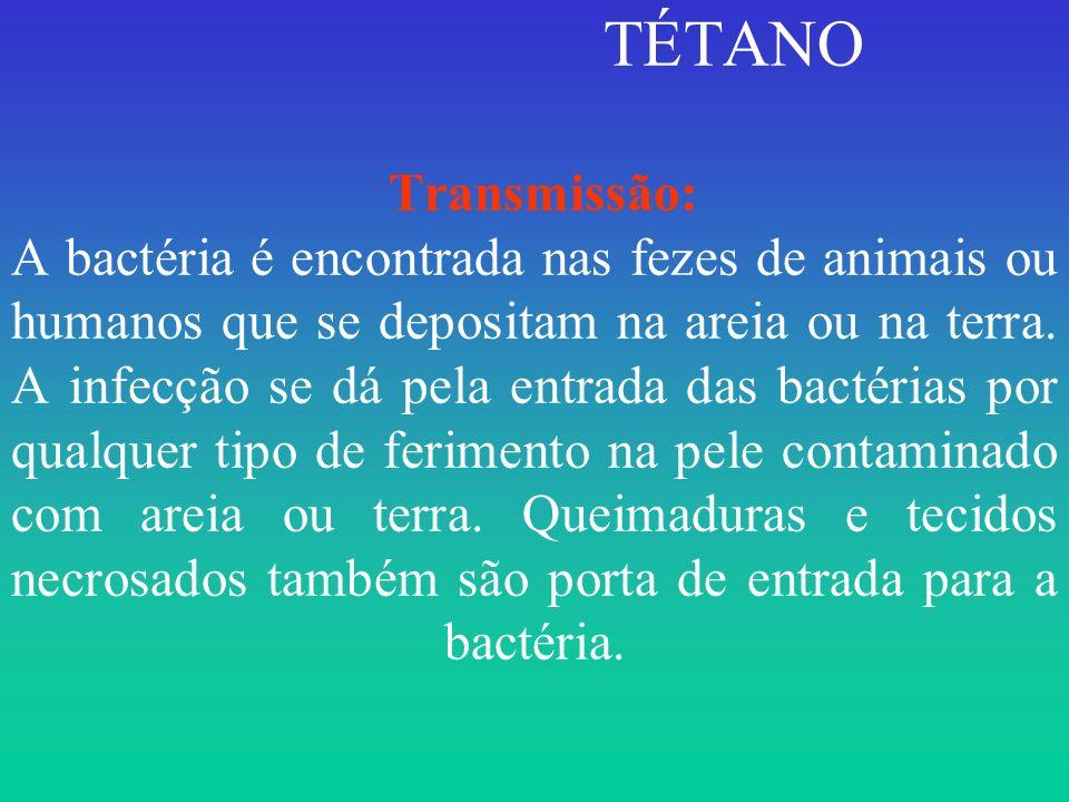 TÉTANO Transmissão: A bactéria é encontrada nas fezes de animais ou humanos que se depositam na areia ou na terra.