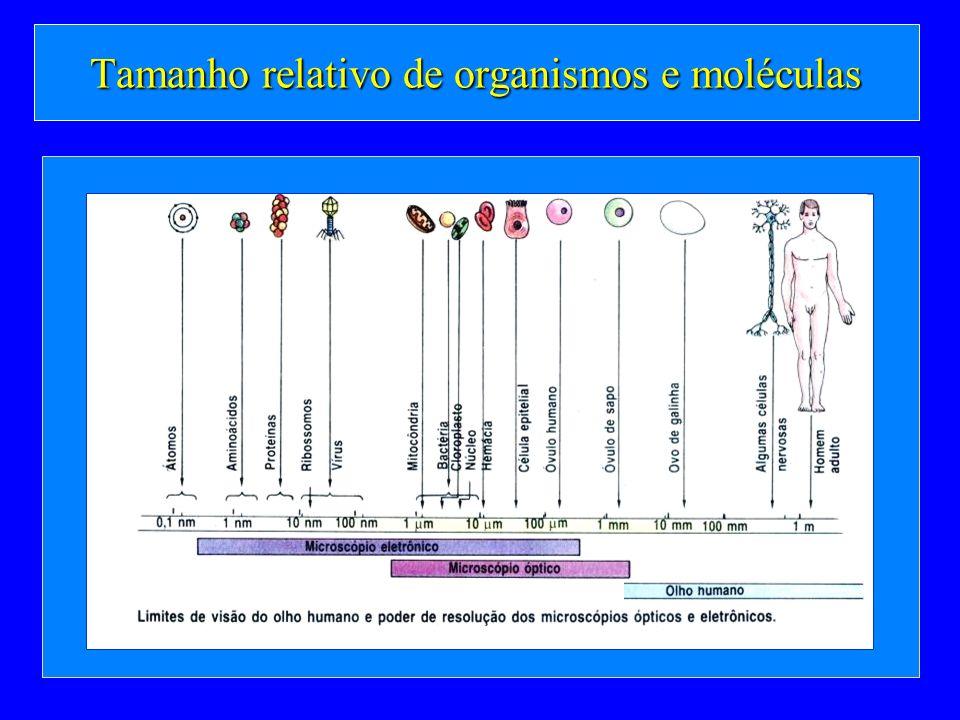 Tamanho relativo de organismos e moléculas