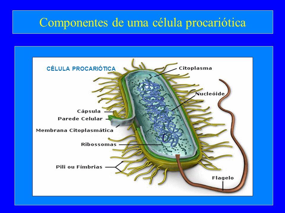 Componentes de uma célula procariótica