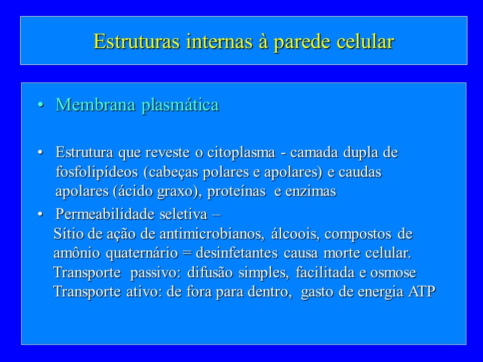 Estruturas internas à parede celular