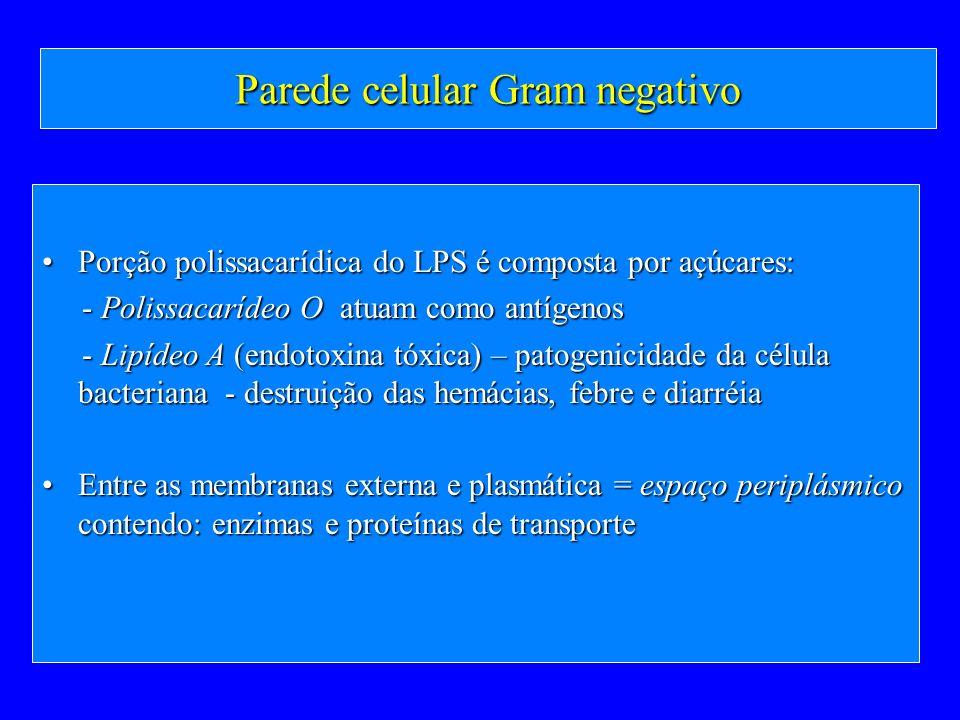 Parede celular Gram negativo