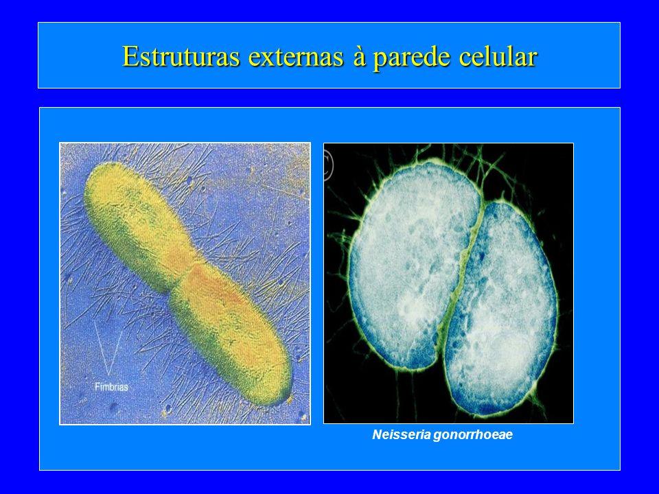 Estruturas externas à parede celular