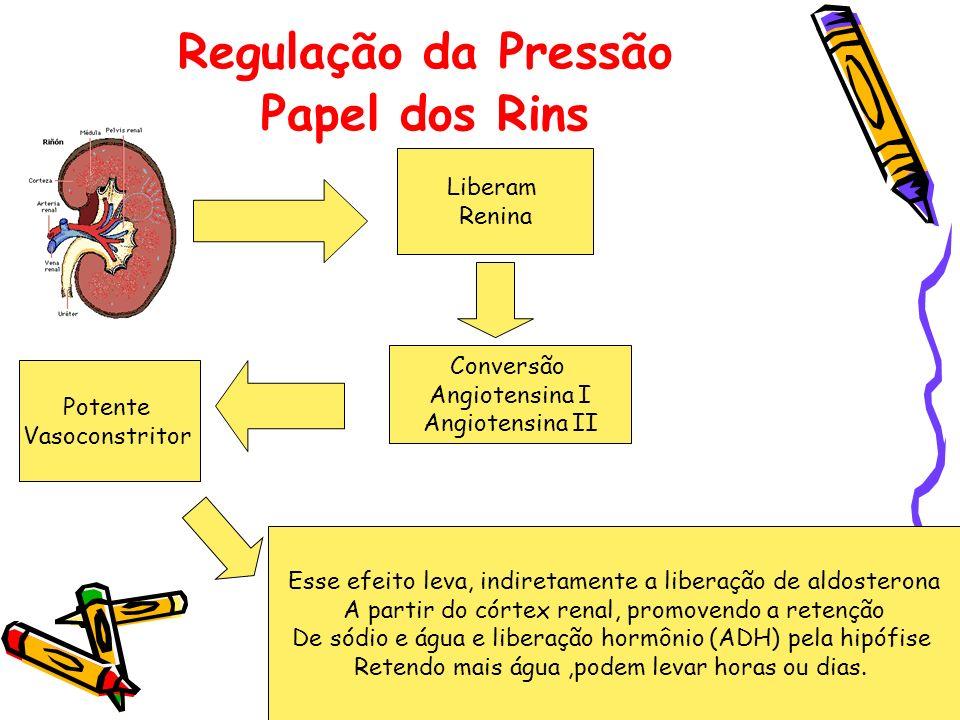 Regulação da Pressão Papel dos Rins