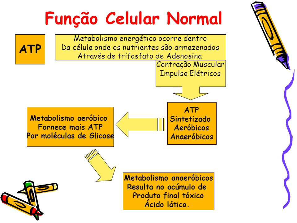 Por moléculas de Glicose Metabolismo anaeróbicos