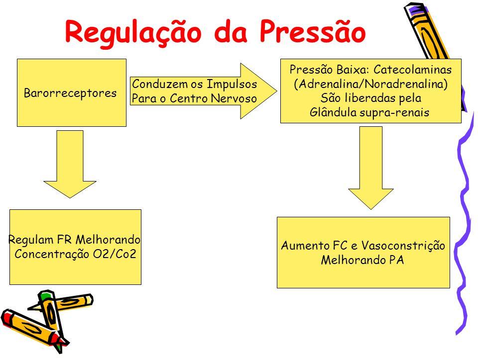 Regulação da Pressão Pressão Baixa: Catecolaminas