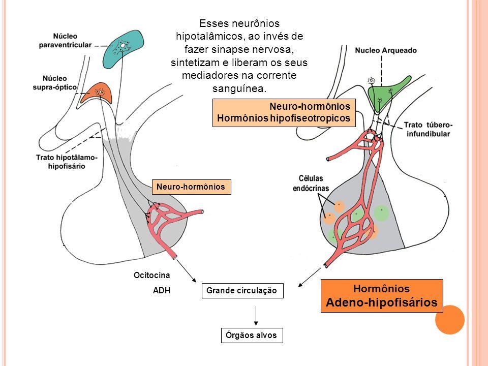 Esses neurônios hipotalâmicos, ao invés de fazer sinapse nervosa, sintetizam e liberam os seus mediadores na corrente sanguínea.