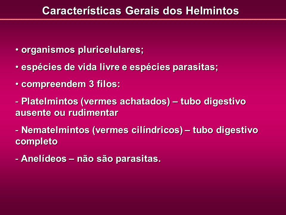 Características Gerais dos Helmintos
