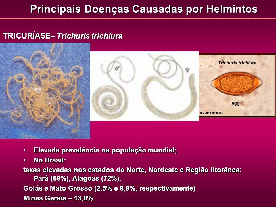 Principais Doenças Causadas por Helmintos