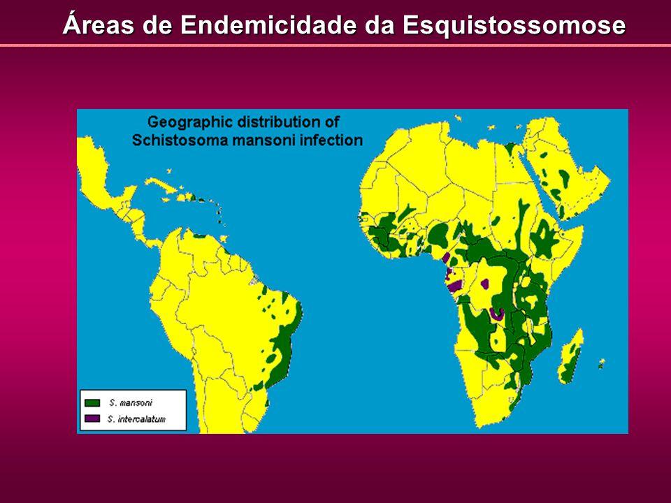 Áreas de Endemicidade da Esquistossomose