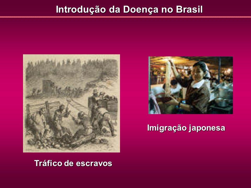 Introdução da Doença no Brasil