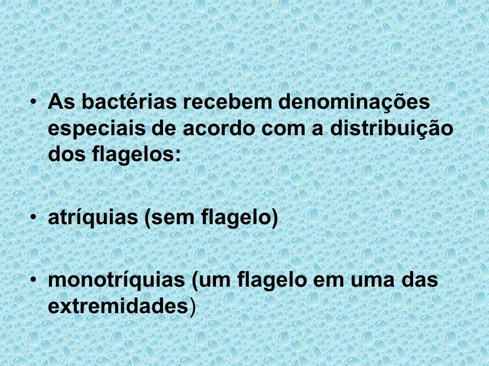 As bactérias recebem denominações especiais de acordo com a distribuição dos flagelos:
