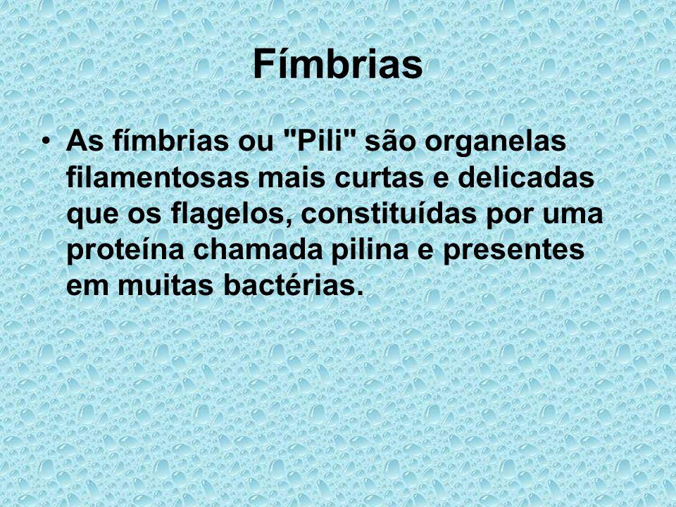 Fímbrias