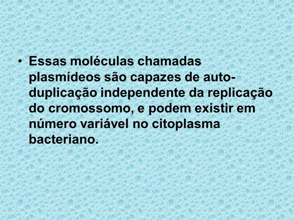 Essas moléculas chamadas plasmídeos são capazes de auto- duplicação independente da replicação do cromossomo, e podem existir em número variável no citoplasma bacteriano.