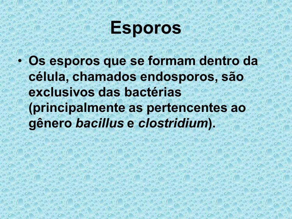 Esporos