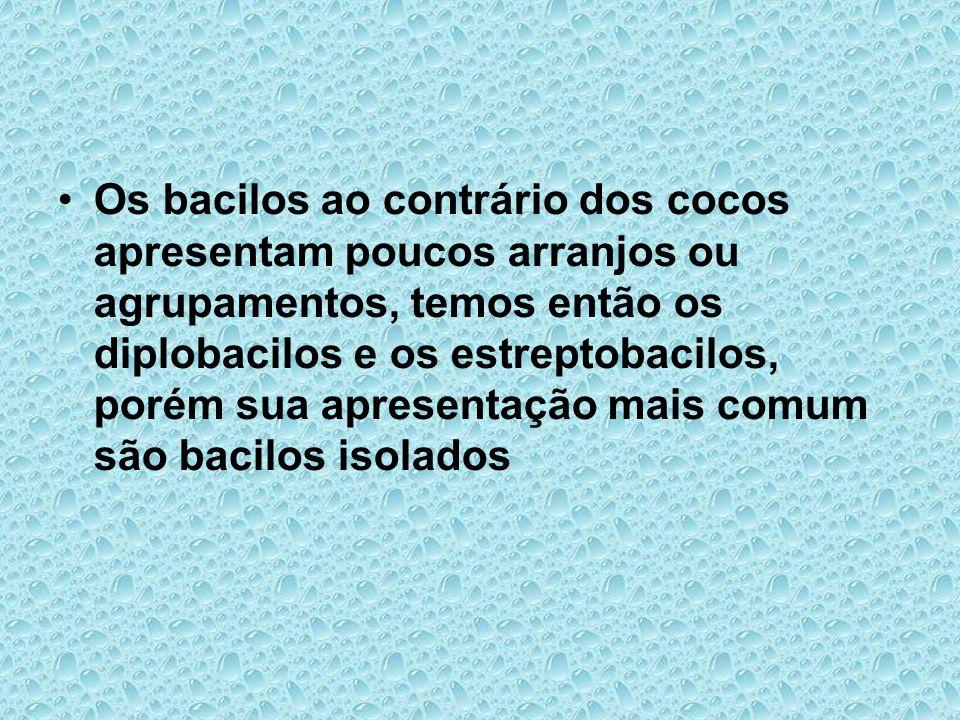 Os bacilos ao contrário dos cocos apresentam poucos arranjos ou agrupamentos, temos então os diplobacilos e os estreptobacilos, porém sua apresentação mais comum são bacilos isolados