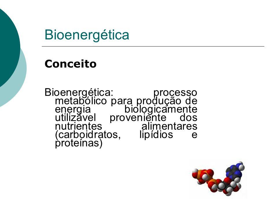 Bioenergética Conceito