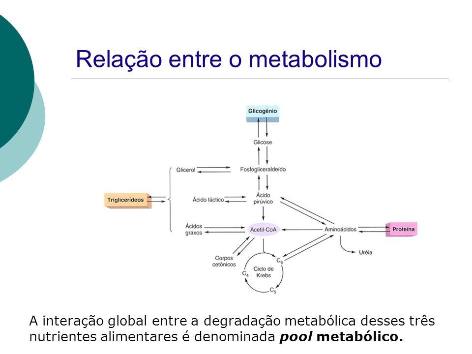 Relação entre o metabolismo