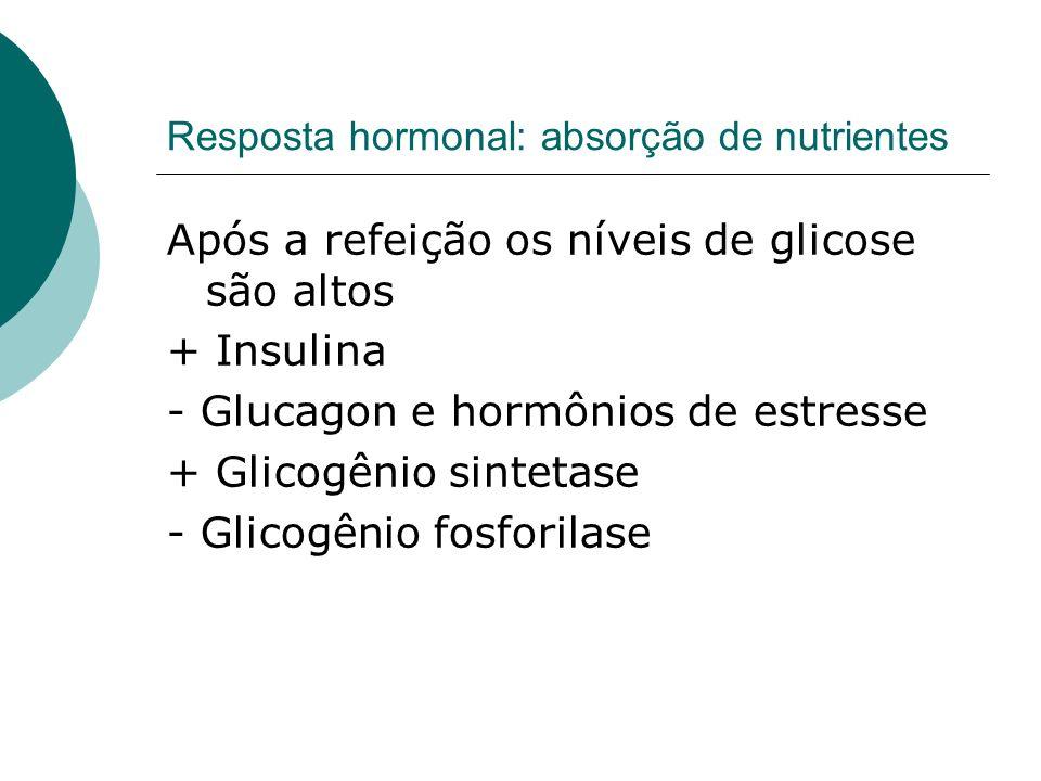 Resposta hormonal: absorção de nutrientes