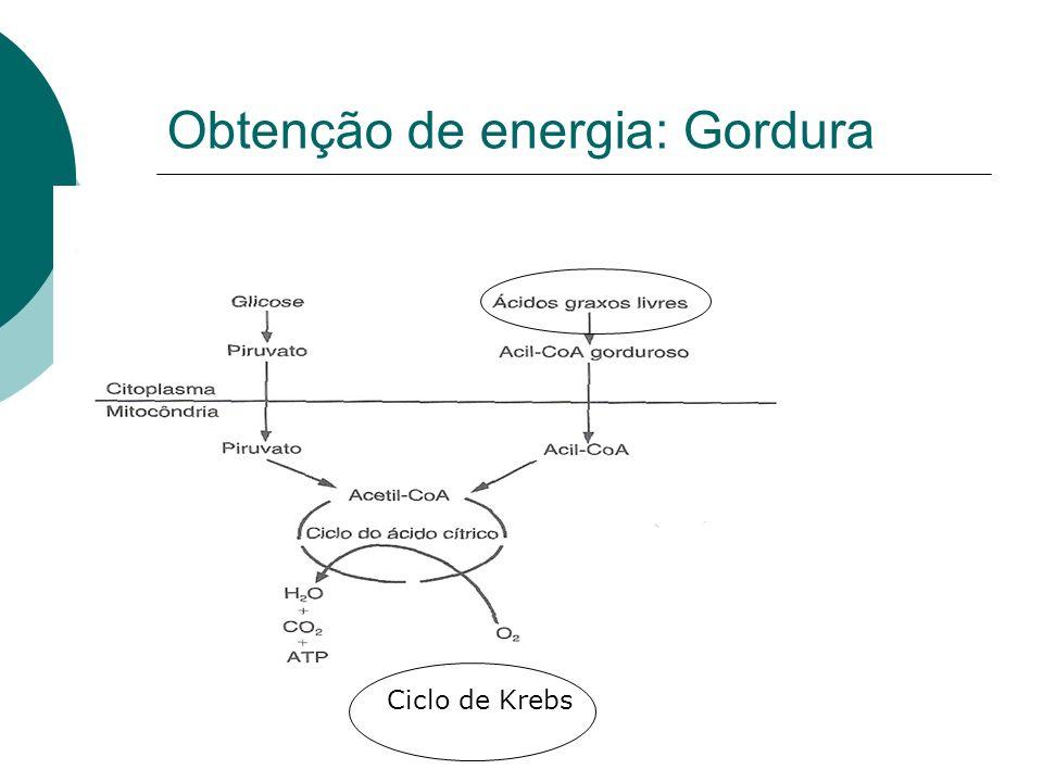 Obtenção de energia: Gordura