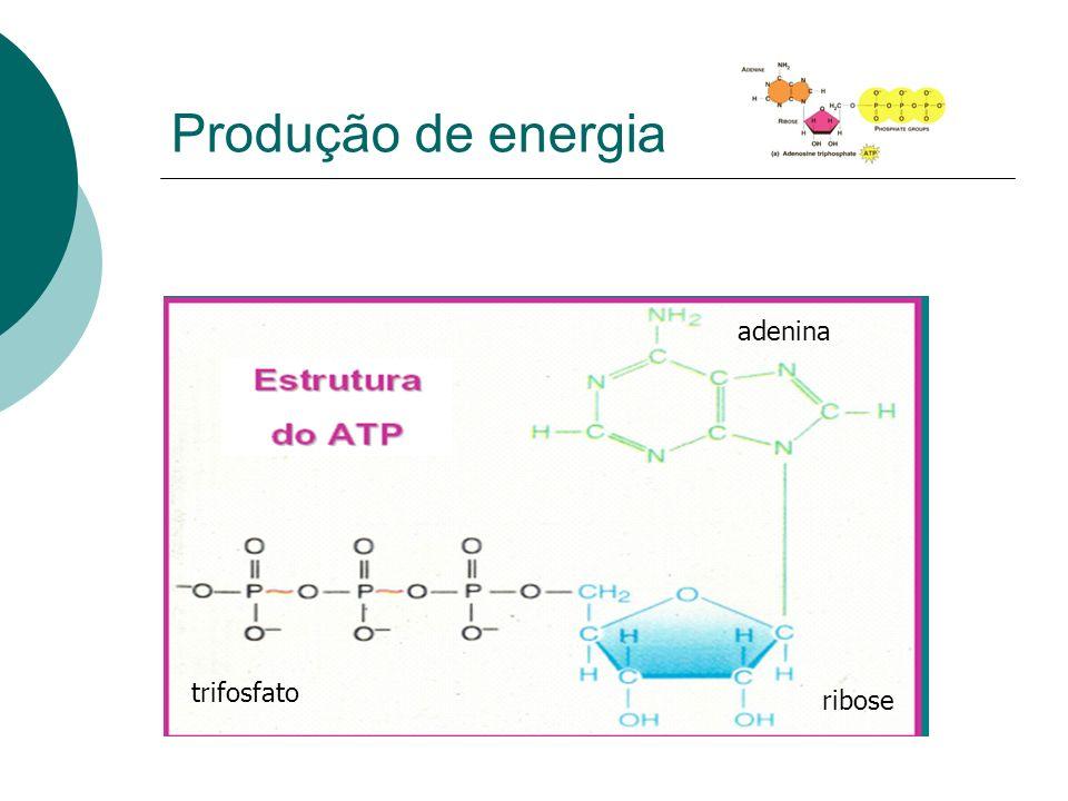 Produção de energia adenina trifosfato ribose