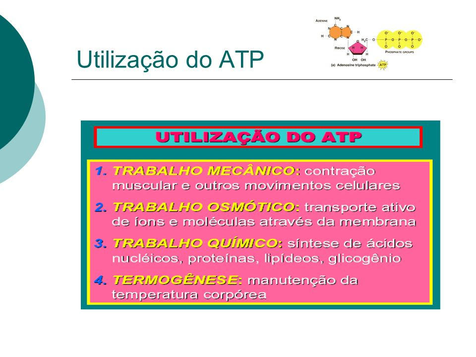 Utilização do ATP