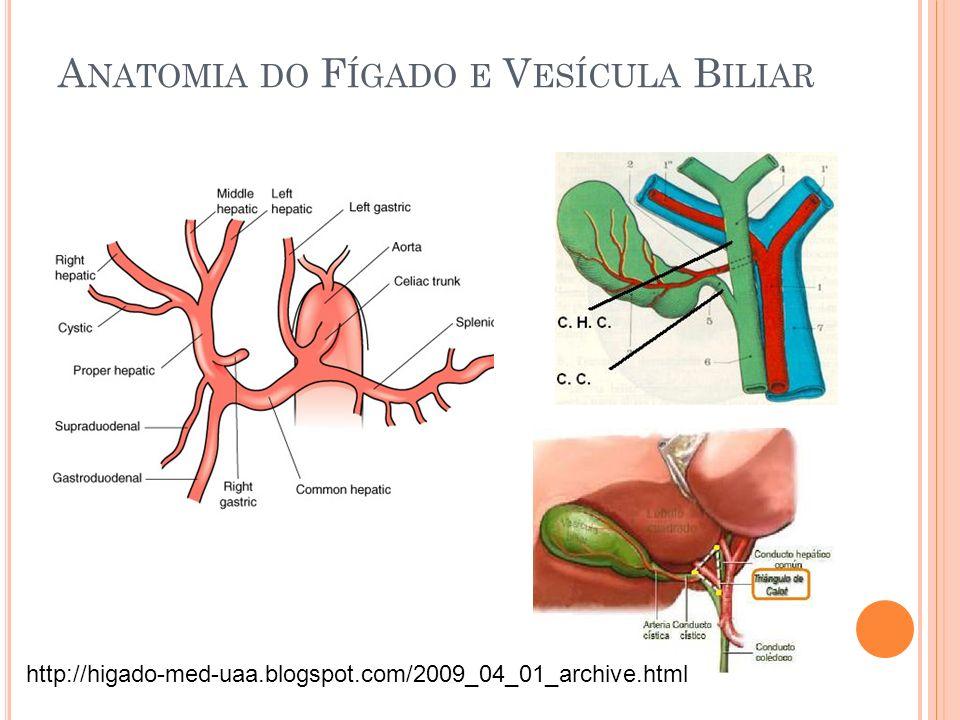 Anatomia do Fígado e Vesícula Biliar