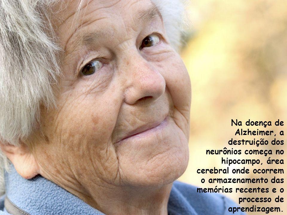 Na doença de Alzheimer, a destruição dos neurônios começa no hipocampo, área cerebral onde ocorrem o armazenamento das memórias recentes e o processo de aprendizagem.