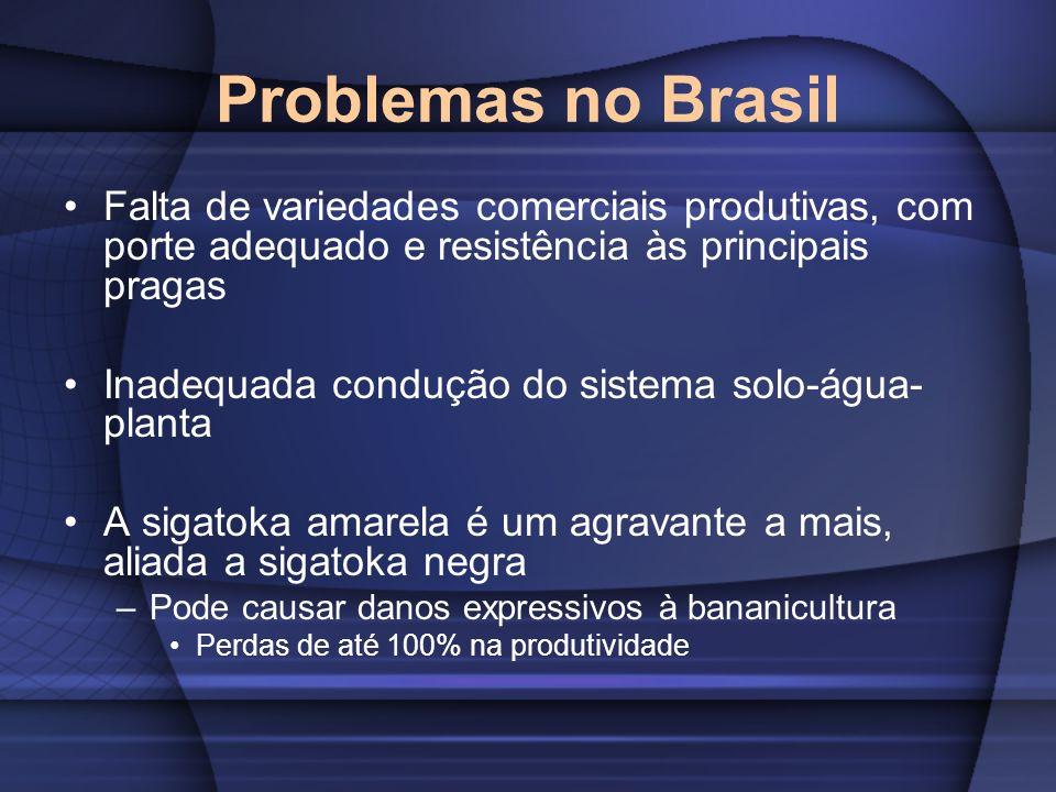 Problemas no BrasilFalta de variedades comerciais produtivas, com porte adequado e resistência às principais pragas.