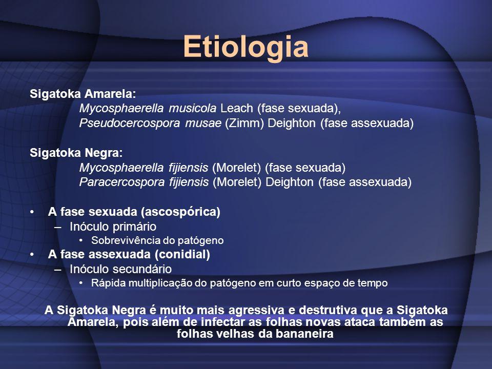 Etiologia Sigatoka Amarela: