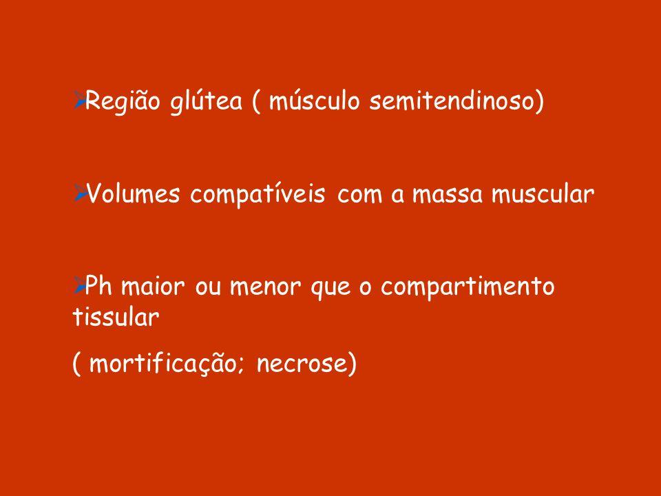 Região glútea ( músculo semitendinoso)