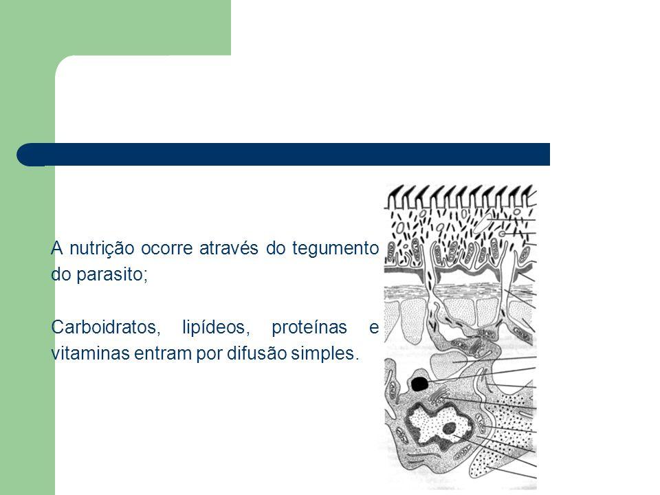 A nutrição ocorre através do tegumento do parasito;