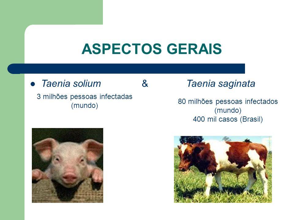ASPECTOS GERAIS Taenia solium & Taenia saginata