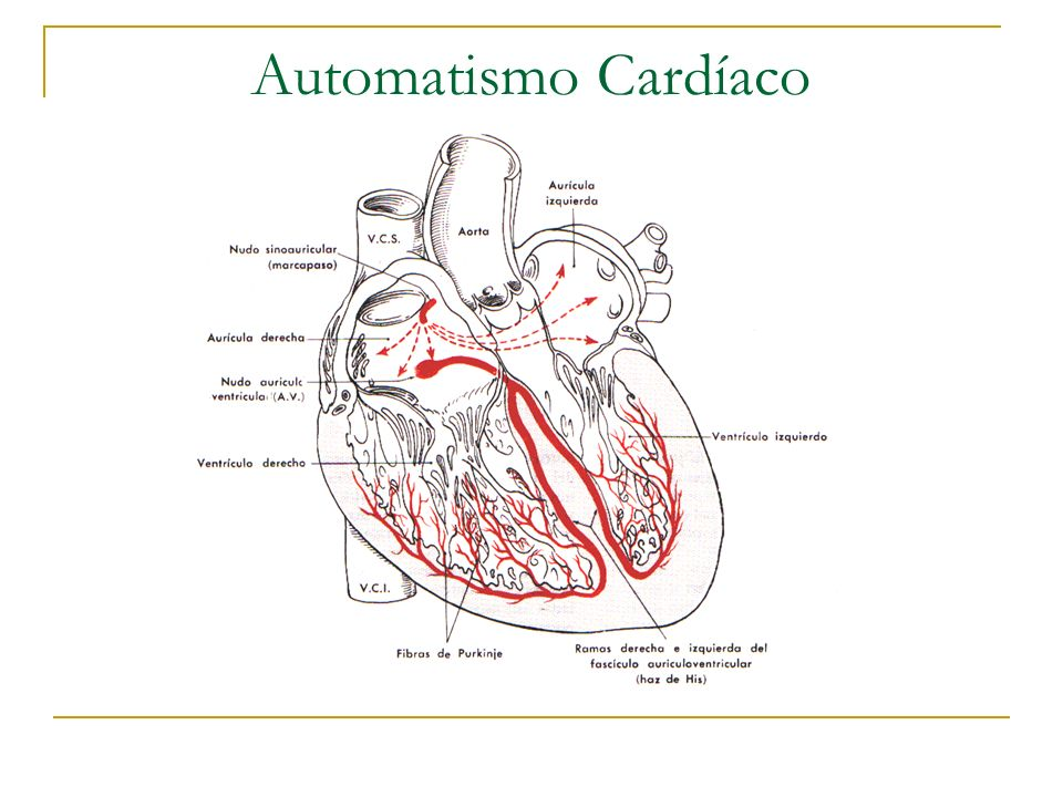 Automatismo Cardíaco