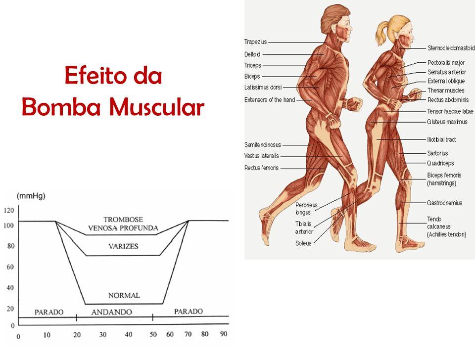 Efeito da Bomba Muscular