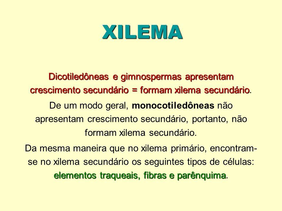 XILEMA Dicotiledôneas e gimnospermas apresentam crescimento secundário = formam xilema secundário.