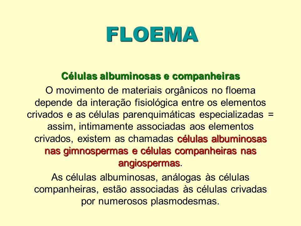 Células albuminosas e companheiras