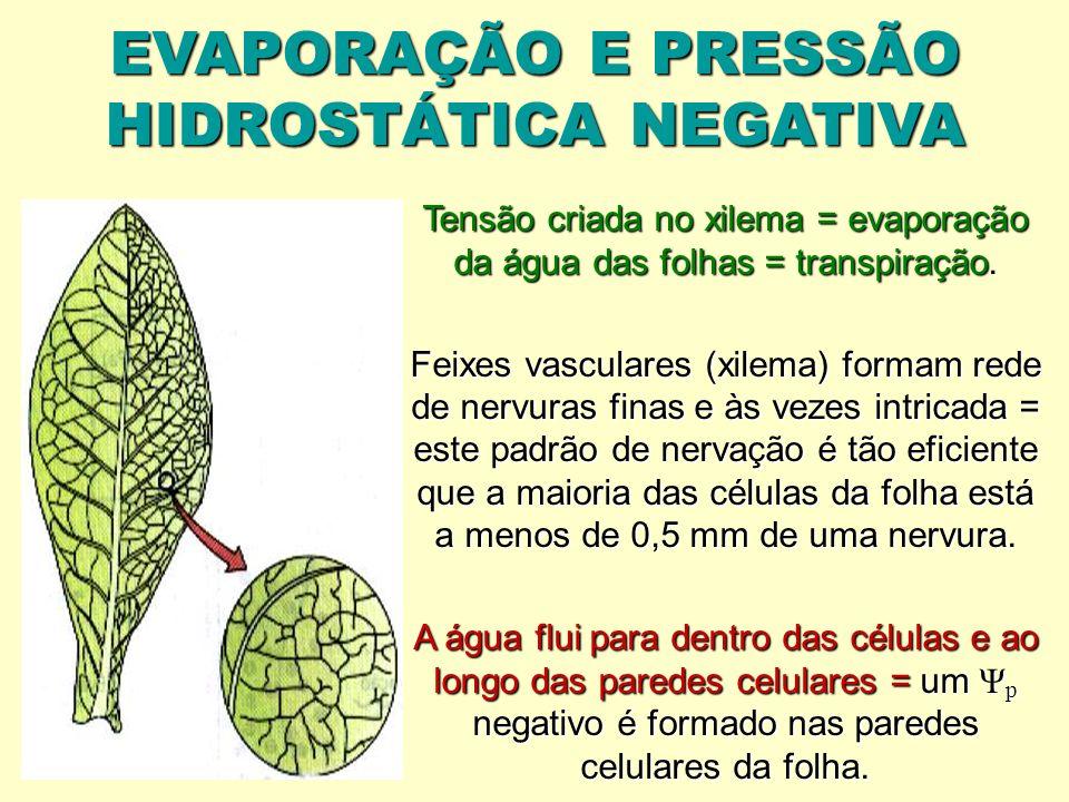 EVAPORAÇÃO E PRESSÃO HIDROSTÁTICA NEGATIVA